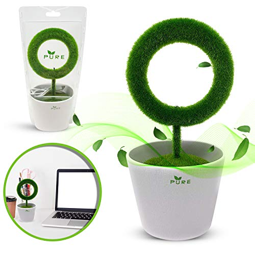 Buy Discount Plant Air Purifier for Desktop Removes Airborne Particles Smoke Air Pollutant Allergen ...
