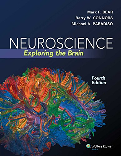 Compare Textbook Prices for Neuroscience: Exploring the Brain, Fourth Edition by Mark F. Bear, Barry W. Connors, Michael A. Paradiso 2015 Hardcover 4th Edition ISBN 4708364234845 by Mark F. Bear,Barry W. Connors,Michael A. Paradiso