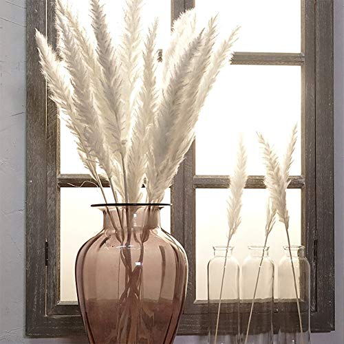 composizioni Floreali Decorazione per casa frammenti Comuni Matrimoni Matrimoni Decorazioni per la casa Beige Hotel Reuvv 15 Pampas Erba Naturale essiccata
