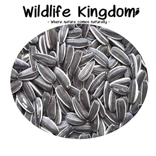Graines de tournesol à rayures de haute qualité, nourriture de perroquet, oiseau domestique, sauvage, par Wildlife Kingdom