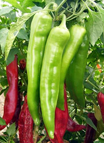 FERRY Bio-Saatgut Nicht nur Pflanzen: 16k Seeds oder 4: New Mexico Big Jim Chili Pepper Samen, NuMex, Hatch, Ristra, by