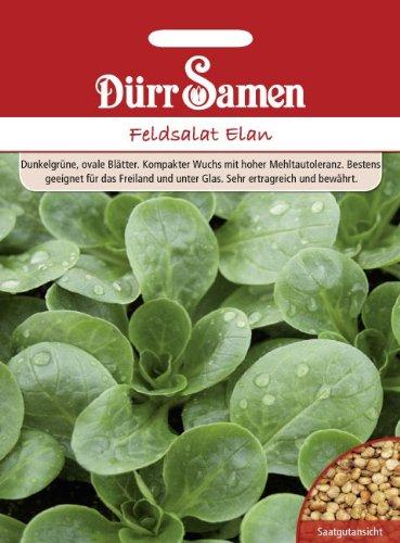 Feldsalat Elan