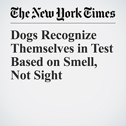 Dogs Recognize Themselves in Test Based on Smell, Not Sight copertina