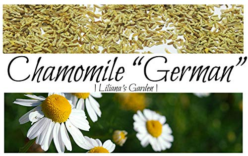 Herb Seeds - German Chamomile - Medicinal, Flowering, and Edible - Liliana's...
