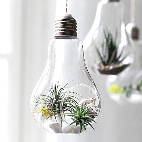 Wankd glazen vaas, 3 stuks, vaas, gloeilamp, vorm glas, hangende stijl, glazen plant, pot voor terras, tuin, huwelijk, decoratie 8*13.5CM transparant