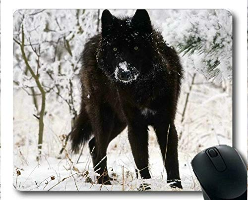 Flying Pig Men Mouse pad,Black Wolf Snow Winter Animal Forest Wolf Rubber Gaming Mouse pad (Multicolor)