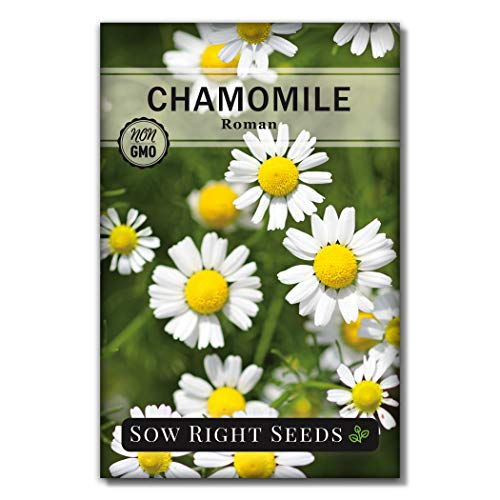 Sow Right Seeds - Roman Chamomile Seeds for Planting - Non-GMO Heirloom Seeds;...
