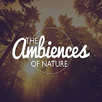The Ambiences of Nature