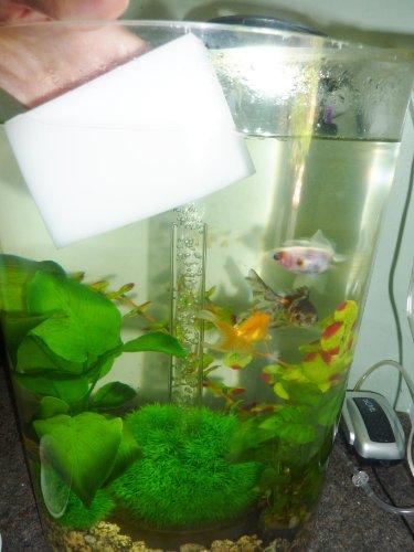 Fish Around Eacute;ponge de nettoyage magique pour aquarium Idéal pour enlever facilement les saletés et les algues présentes sur la paroi de l'aquarium