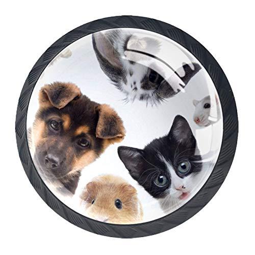 YATELI Haustier Hund Katze Kaninchen [4 Stuck] Küchenknöpfe - Türknopf Knauf für Schrank, Schubladenknopf, Türknäufe, Möbelknopf