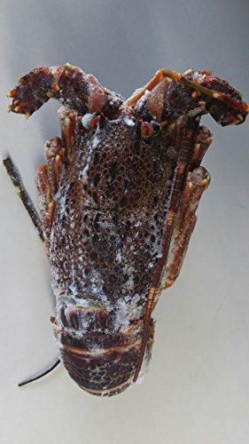 南アフリカ産 冷凍 縄文 伊勢海老 ( 生ロブスター ) 10匹(匹200-250g) 加熱してお召し上がりください。業務用