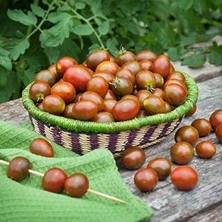 Vegetable Seeds - 10 Seeds of Chocolate Sprinkles Grape Tomato