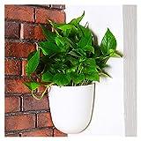 Jardineras Colgantes Plantadores colgantes Auto Riego Ángulo derecho Montado en la pared Esquina de la pared de la pared Potes de flor de plástico Cesta de jardín interior con ganchos Maceta de pared