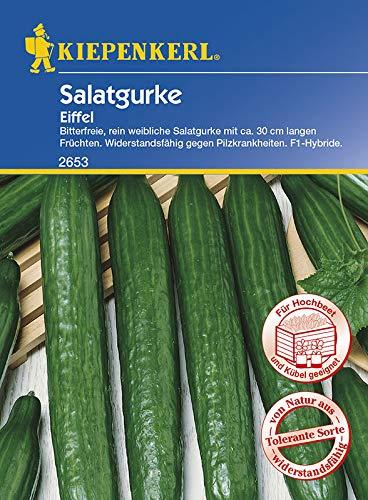 Gurke (Salatgurke) Eiffel, F1-Hybride, bitterfreie rein Weibliche Salatgurke mit ca. 30 cm langen Früchten, Wiederstandsfähig gegen Pilzkrankheiten