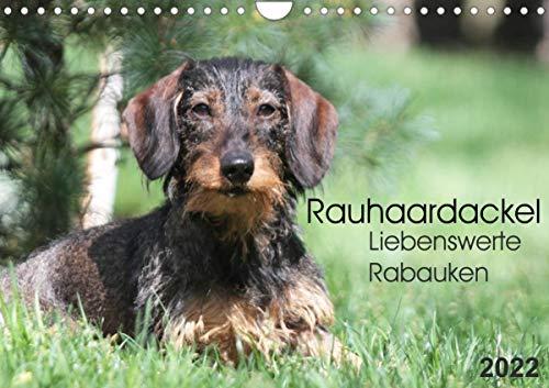 Liebenswerte Rabauken - Rauhaardackel (Wandkalender 2022 DIN A4 quer)