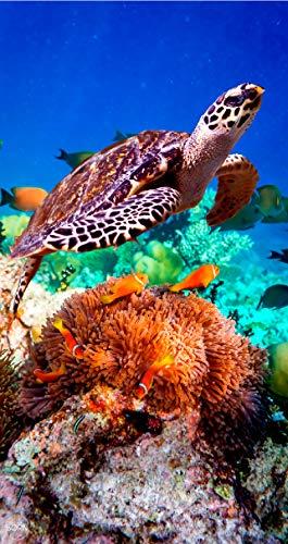 TEXTIL TARRAGO Toalla de Playa 90x170 cm 100% Algodon Tortugas estampcaion Digital fotografica THD05