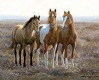SJYHNB ペイントバイナンバー 動物の馬 Diyペイント番号キット 子供 大人 Diy キャンバスペインティング 数字 アクリル絵画 アートクラフト ホームウォールデコ 16 x 20インチ(フレームなし)