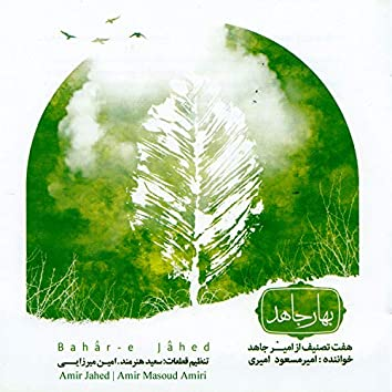 Bahare Jahed