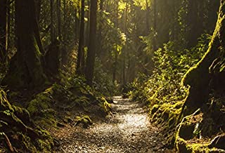 Forest Background Lush Green Vegetation Patches of Sunlight Nature Scene Backdrop Laeacco 10x6.5ft Dreamy Rainforest Path Wallpaper Photography Picture
