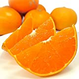 愛媛県産 せとか 5kg 訳あり みため×おいしさ◎ 甘い柑橘 みかん 果物 清家ばんかんビレッジ