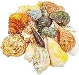 Juvale Beach Seashells, Nautical Decor (20 Pack)