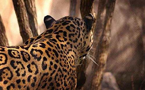 Lsping Erwachsenen Puzzle 1000 Teile Foto Jaguare Großkatzen Tier 50x70cm