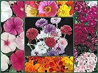 Farm Mix Favorites Special、フルサイズパック5、家宝の花の種、カラフル!