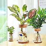 Desktop Glass Planters Terrarium