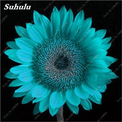 Nouveautés 40 Pcs Graines de tournesol bio mixte Helianthus annuus Graines d'ornement semences de fleurs de tournesol russe plante pour jardin 8