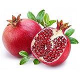 XQxiqi689sy - Semi di melograno, 15 pezzi, semi di frutta dolce, bonsai decorazione da giardino