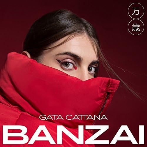 Gata Cattana