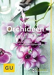 Schlaffe Blätter Orchideen Umtopfen Und Tipps Für Die Orchideen