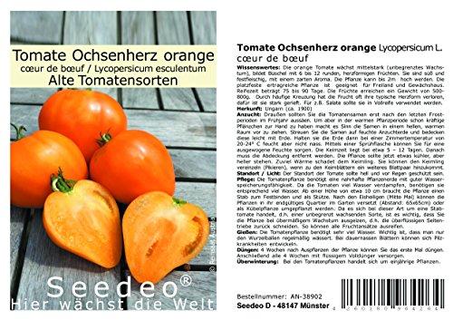 Seedeo® Tomate Ochsenherz orange (Lycopersicum L.) 20 Samen BIO