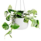OMYSA Hanging Planter 8 inch (White) - Ceramic Hanging Pots for Plants - Ceiling & Wall - Flower Pot Outdoor & Indoor Hanging Plant Holder - 6 Colors (White, Black, Peach, Blush, Sage, Honey)
