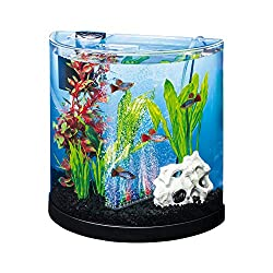 Best Betta Fish Tanks 5 Amazing Set Ups For Your Betta Fish