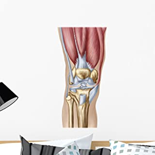 Wallmonkeys Anatomy Human Knee Joint Wall Decal Peel and Stick Graphic (24 in H x 16 in W) WM55329