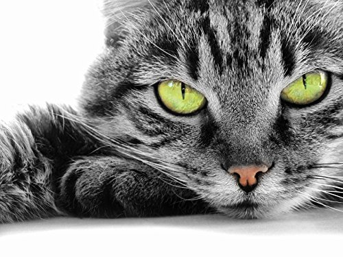 Stickersnews - Stickers autocollant ou Affiche poster Beaux Chat Au Grand Yeux Vert AN_00038 Stickers/Affiche - Stickers autocollant, Dimensions - 29,7x42 cm (A3)