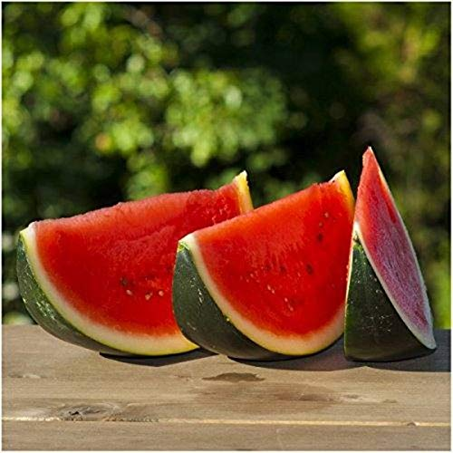Portal Cool 25+ Organic Grown Bush Sugar Baby Wassermelone Samen-R 185