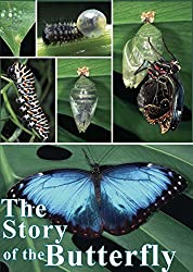 Image: Watch The Story of the Butterfly | From egg to caterpillar, to chrysalis to adult, the life cycle of a butterfly is an amazing story of survival