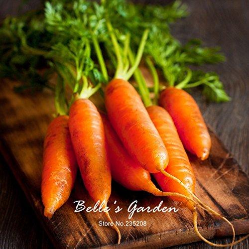100pcs carotte Semences Rouge Bleu Jaune arc-en-Graines Légumes Jardin des Plantes Heriloom bio Daucus Carota Graines de Jardin potager 01