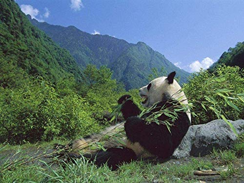Rompecabezas Rompecabezas De Madera De 1000 Piezas Panda