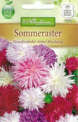 Chrestensen Sommeraster 'Straußenfeder-Aster-Mischung'