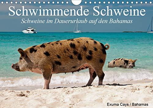 Schwimmende Schweine (Wandkalender 2021 DIN A4 quer)