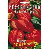 si differenzia dal Habanero Red Savina per sapore, forma dei frutti e piccantezza