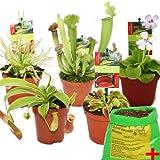 Exotenherz - Set de iniciación plantas carnívoras - 5 plantas + suelo - suelo carnívoro...