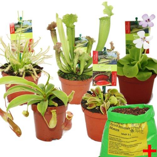 Exotenherz - Starter Set Fleischfressende Pflanzen - 5 Pflanzen + Erde - Karnivorenerde