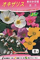 【花球根】 オキザリス 寒咲き球根(混合)8球入 カネコ種苗