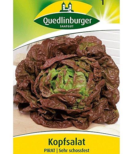 Quedlinburger Kopfsalat 'Pirat', 1 Tüte Samen