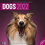 Dogs 2022, Wandkalender / Broschürenkalender im Hochformat (aufgeklappt 30x60 cm) - Hunde-Kalender mit Monatskalendarium zum Eintragen