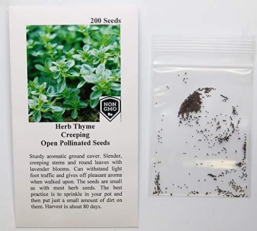 David's Garden Seeds Herb Thyme Creeping 9388 (Green) 200 Non-GMO, Heirloom Seeds